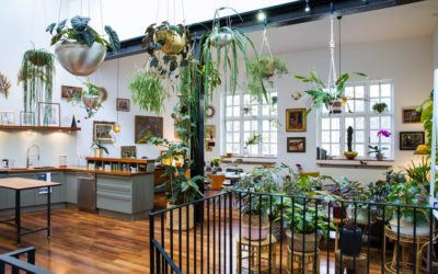 'Houseplants make me happy': Jamie Song's urban jungle